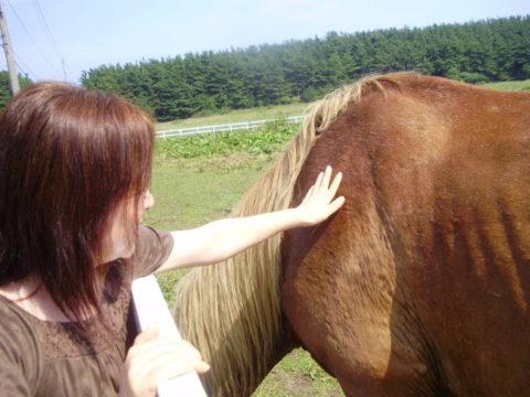 尻屋崎公園の寒立馬