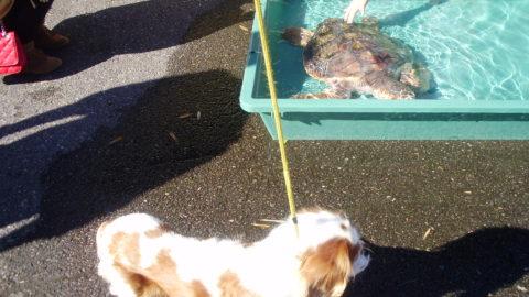 ウミガメ公園のウミガメと愛犬
