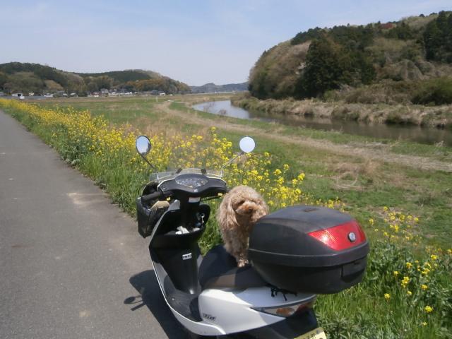 小貝川堤防路ツーリング2017-4