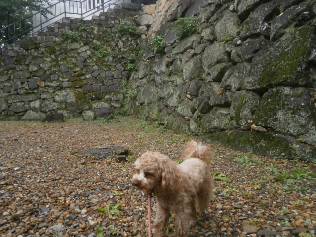 旅中の愛犬散歩|岡崎公園と道の駅藤川