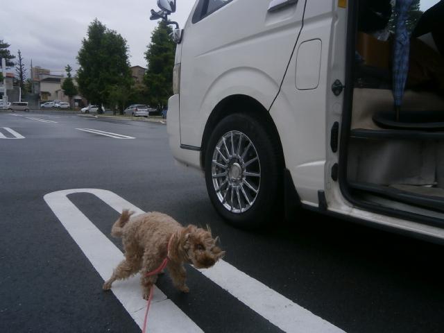 浜松城公園の愛犬散歩|直虎ゆかりの地