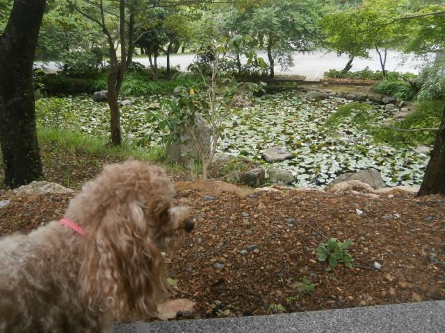 井伊谷の愛犬散歩|直虎ゆかりの地