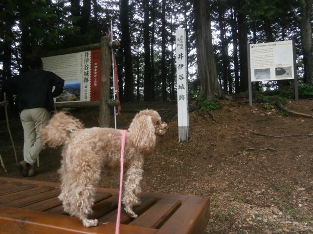 井伊谷城跡城山公園の愛犬散歩|直虎ゆかりの地