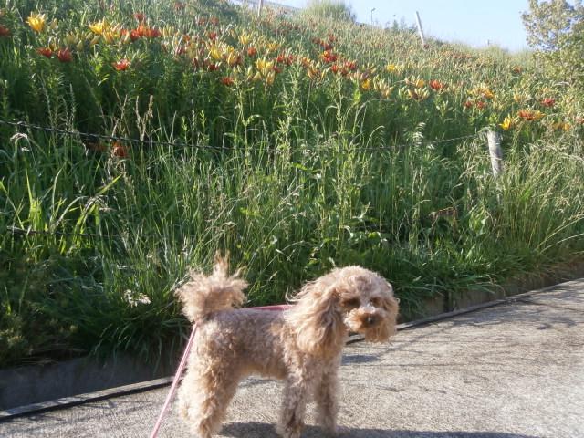 旅行中の愛犬散歩|静岡県道の駅掛川