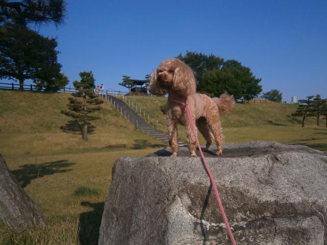 松代PAと八幡原歴史公園|旅中の愛犬散歩