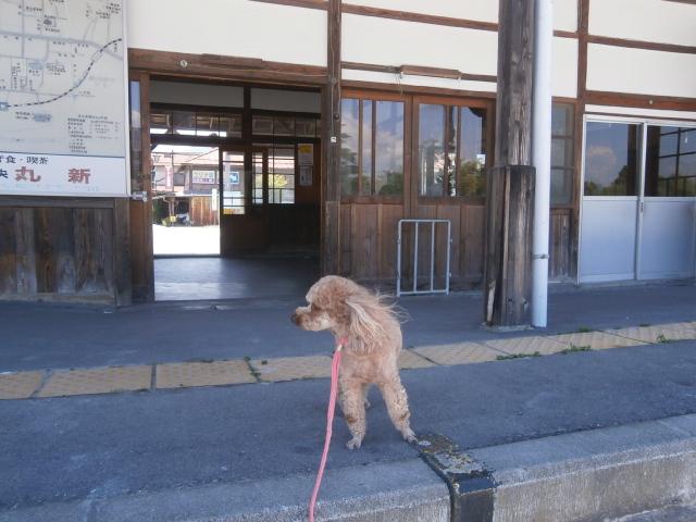旧松代駅を探索|旅中の愛犬散歩