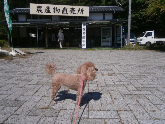 道の駅マルメロの駅ながと|旅中の愛犬散歩