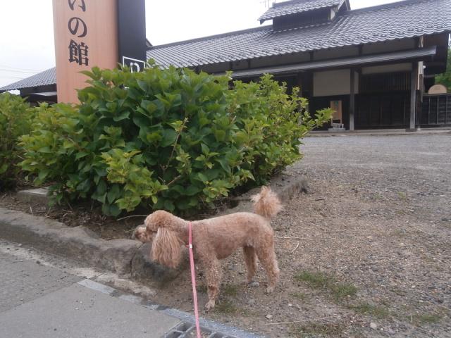 龍岡城五稜郭を散歩|長野県佐久市
