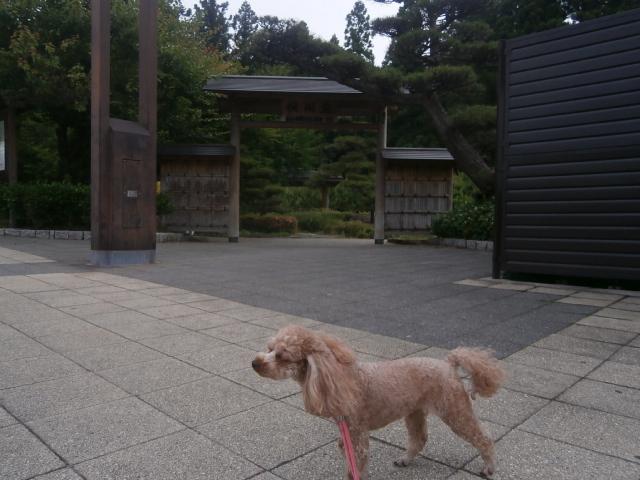 上信越道横川SA|旅中の愛犬散歩