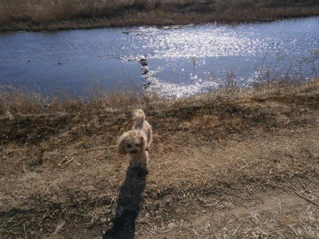 小貝川の瀬付け場と愛犬