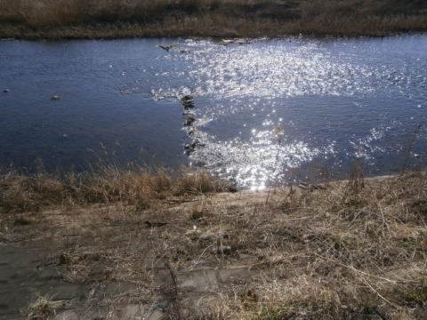小貝川の瀬付け場1