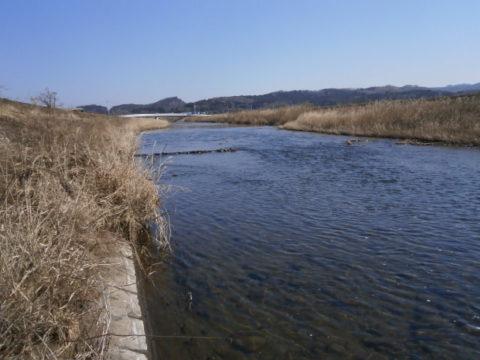 小貝川の瀬付け場2